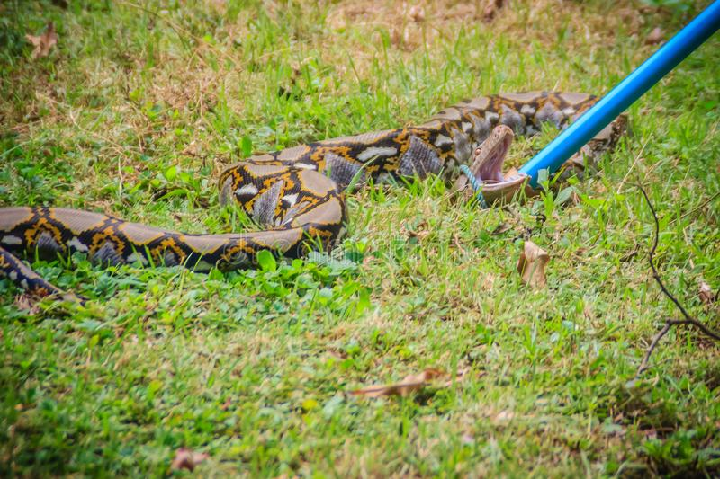 People Are Catching Snake In The Garden With Snake Catcher Tool ...