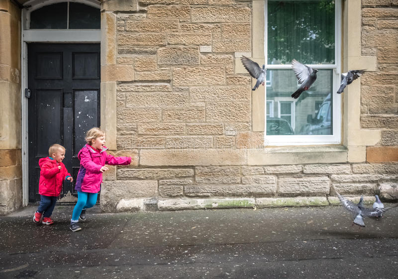 Children chasing pigeons. Little boy and girl chasing pigeons in front of a home in Edinburgh stock images