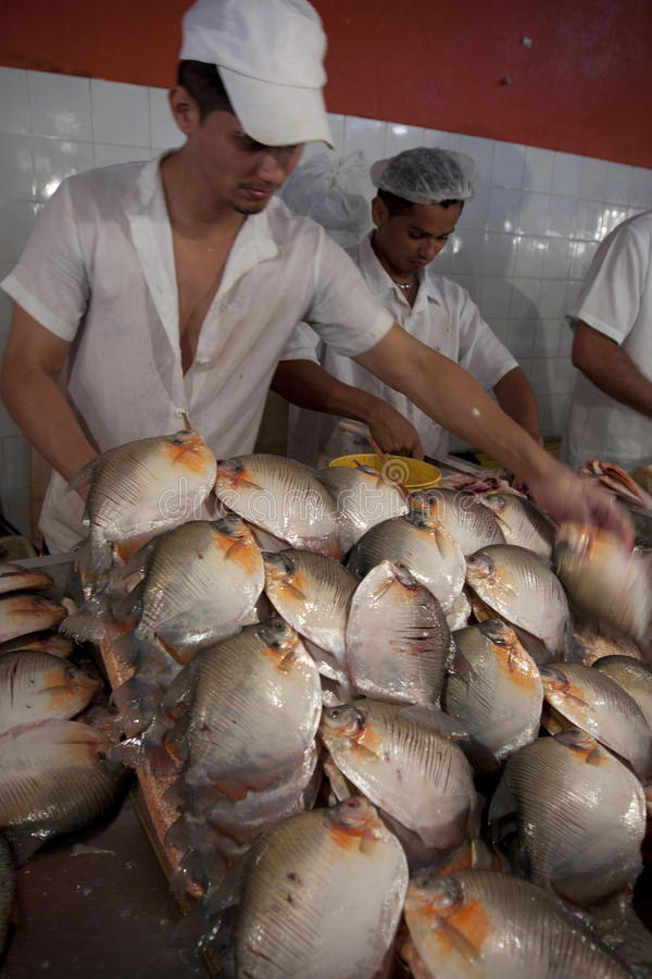 People cutting river fish in amazon editorial stock photo for River fish market