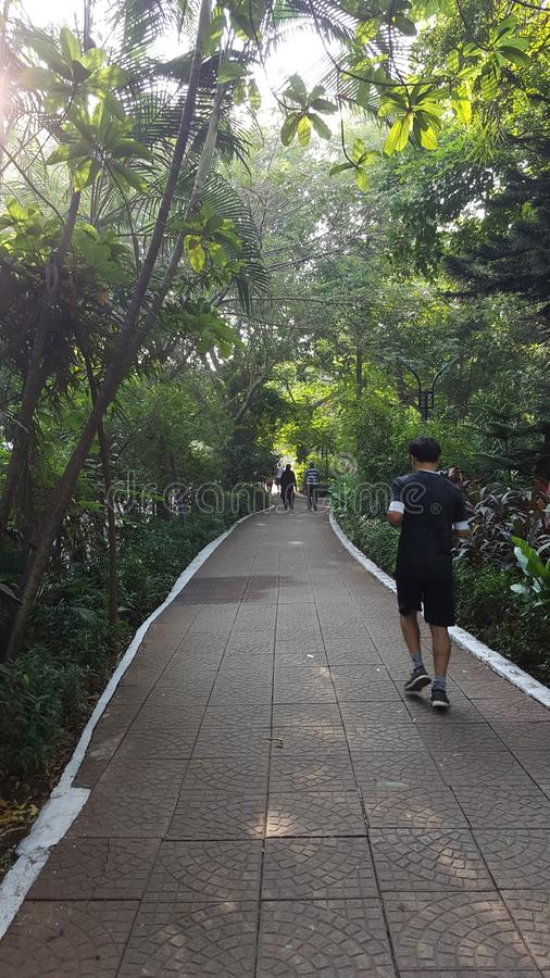 Morning walk track with tiled path. People do morning walk on a sun lit walking track in neighborhood garden lined up with tree stock photography