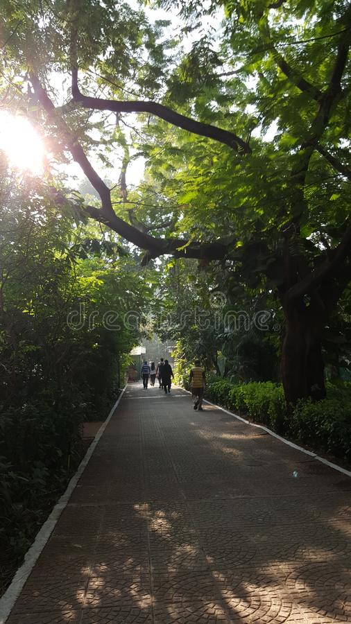 Morning walk track with tiled path. People do morning walk on a sun lit walking track in neighborhood garden lined up with tree stock images