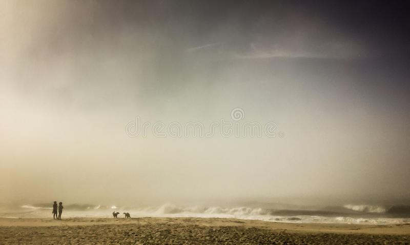 People and dogs on foggy beach, Hamptons, NY stock images