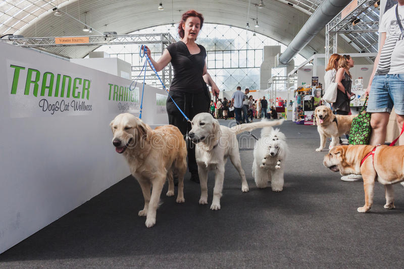 People and dogs visiting Quattrozampeinfiera in Milan, Italy. MILAN, ITALY - JUNE 7: People and dogs visit Quattrozampeinfiera, event and activities dedicated to stock images