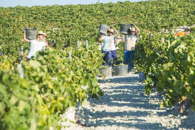 People doing manually harvest stock photo