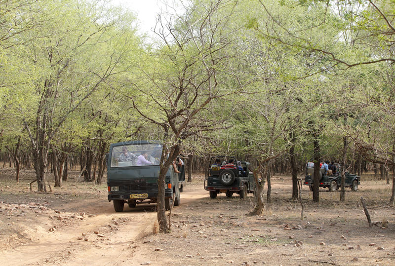 People eagerly waiting for tiger sighting in Ranthambore park. RANTHAMBORE, INDIA-JUNE 24: People eagerly waiting for tiger sighting in Safari Jeep and canter stock photo