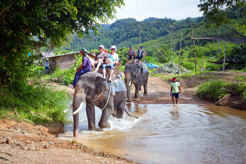 People on the elephant trekking in Thailand. KHAO SOK, THAILAND - NOV 13: Unidentified people on the elephant trekking in Khao Sok National Park. This is one of royalty free stock image