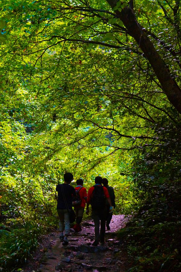 People entering the forest. Shooting location : Kamakura, Kanagawa Prefecture stock image