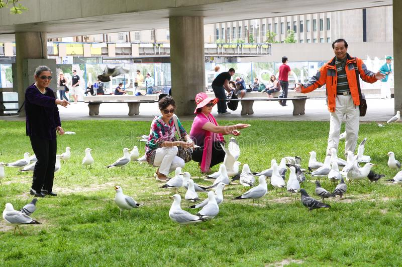 People feeding birds in the park royalty free stock images