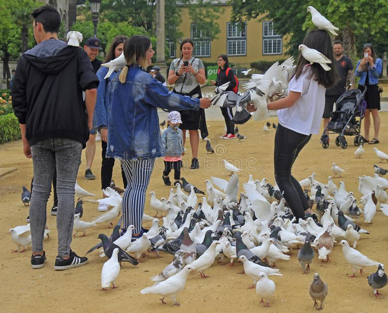 People are feeding pigeons at square in Seville, Spain royalty free stock photography