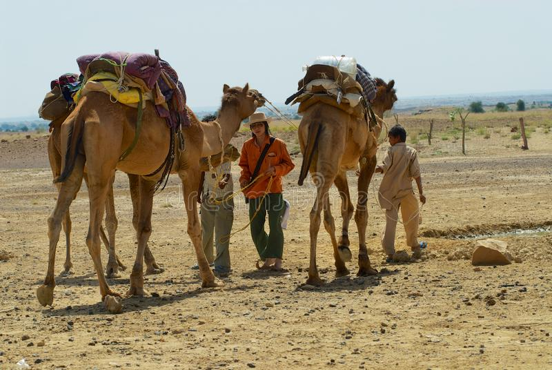 People getting camels ready for a safari ride in the desert near Jodhpur, India. royalty free stock photography