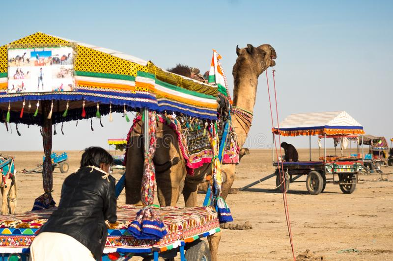 People getting onto colorful camel carts as other carts go in the distance royalty free stock photo