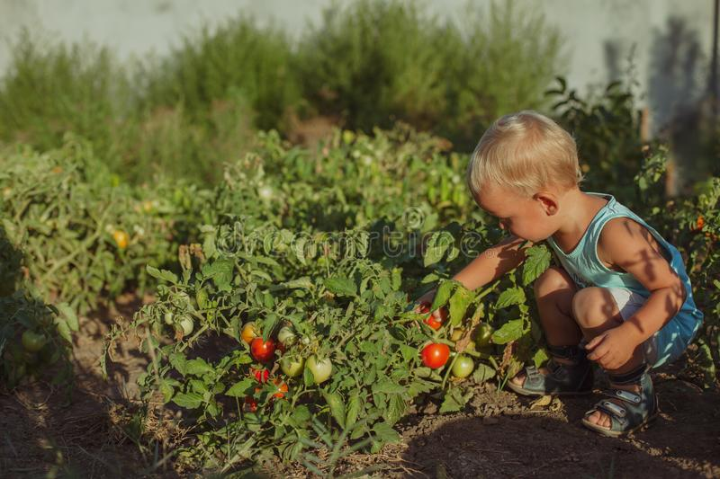 people grow natural food stock images