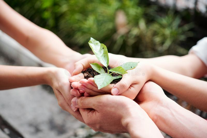 People growing plants. Close-up of hands of people holding abundance soil with young plant in hands for agriculture stock photography