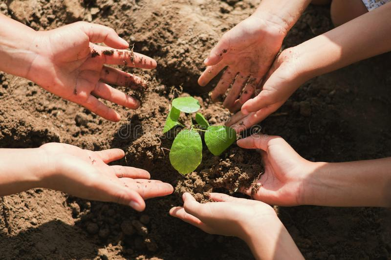 people hand group help plant trees to help reduce global royalty free stock photography