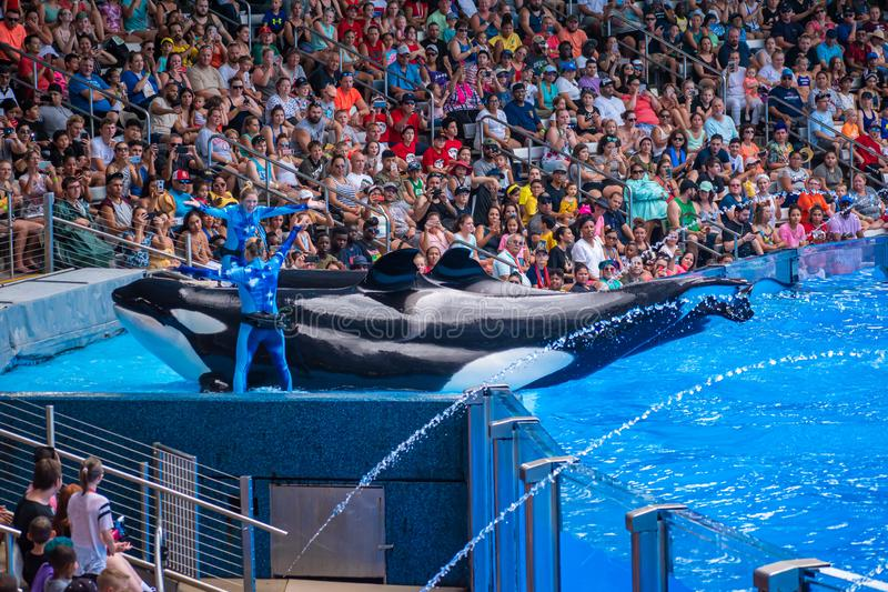 People having fun majestic killer whales in One Ocean show at Seaworld 10 royalty free stock photography