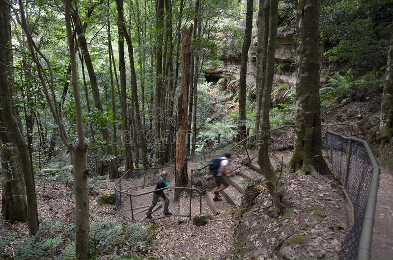 People hikes in the rainforest of Jamison Valley Blue Mountains stock image