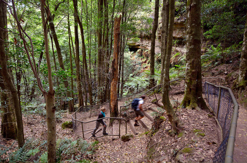 People hikes in the rainforest of Jamison Valley Blue Mountains royalty free stock images