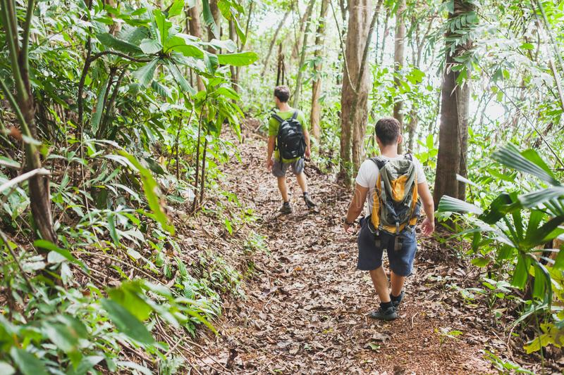 People hiking with backpacks, jungle trekking, group of tourists backpackers stock images