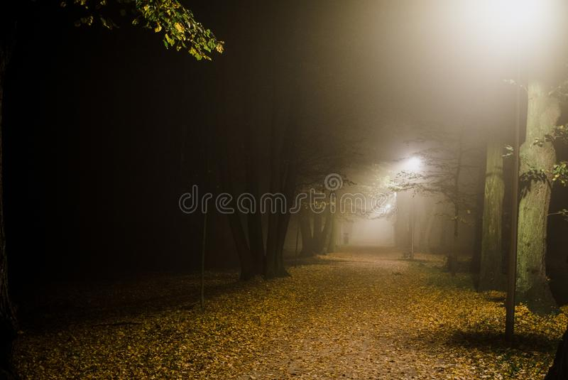People motion blur in the park, night and heavy fog royalty free stock image