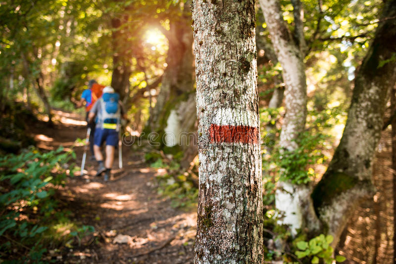 People mountain hiking in the woods stock photos