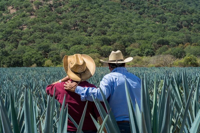Contemplating the plantation of agave for the tequila. People observe the agave fields in the magical town of Tequila Jalisco, Mexico royalty free stock photos