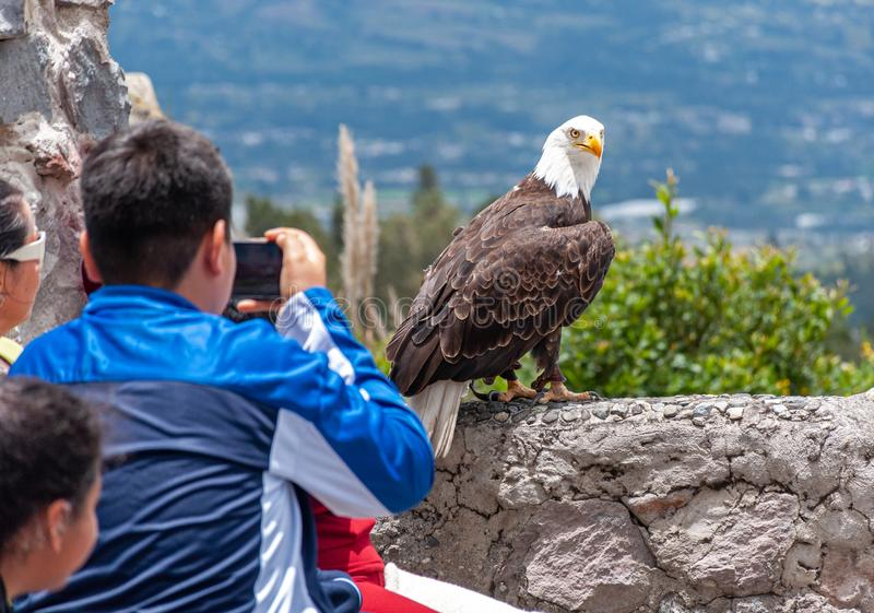 People observing a bald eagle stock image