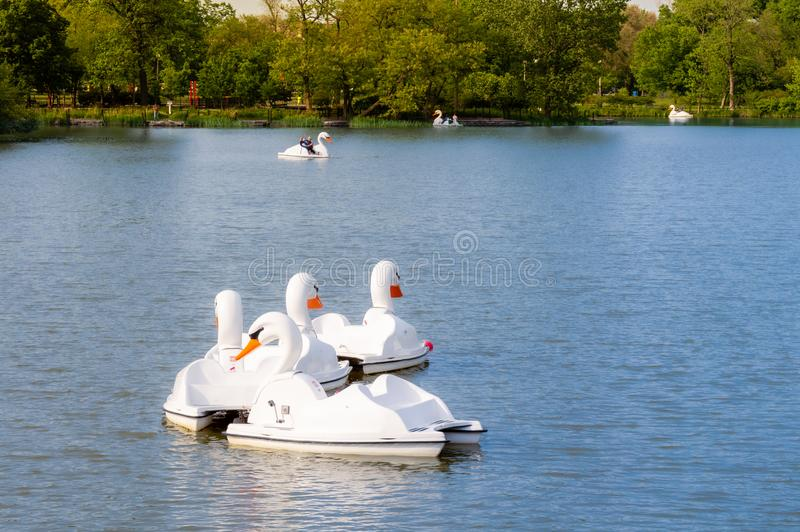 People paddle in swan duck boats on a blue lagoon at nature preserve. Humboldt Park in Chicago royalty free stock photo