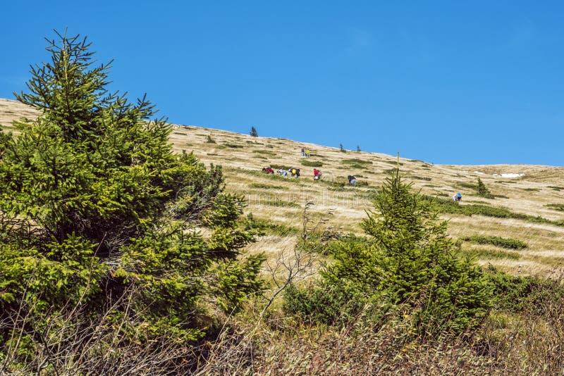 People picking berries, Kralova Hola peak, Slovakia royalty free stock photo