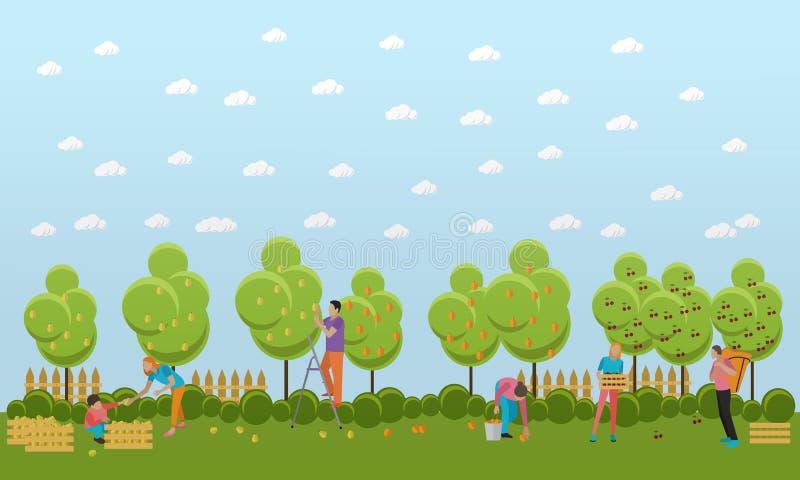 Download People Picking Fruit In Garden, Vector Illustration. Stock Vector    Illustration Of Concept