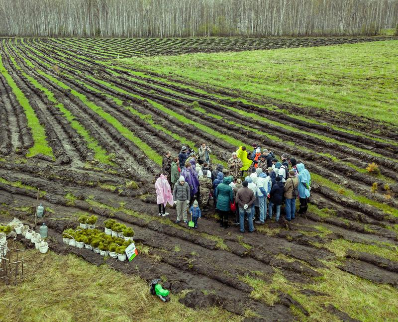 People plant trees on the field in beds dug. Novosibirsk, Russia - 05.26.2018: People plant trees on the field in beds dug with even parallel lines to make the stock photos