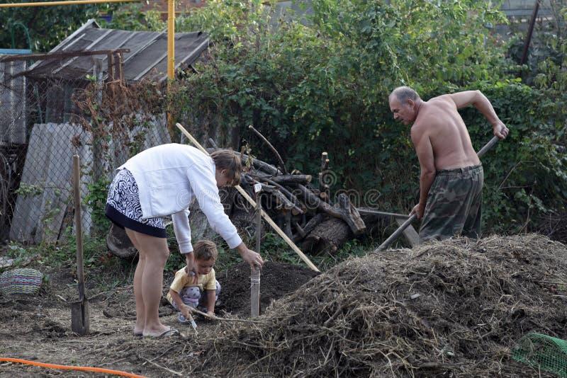 People planting seedlings stock image