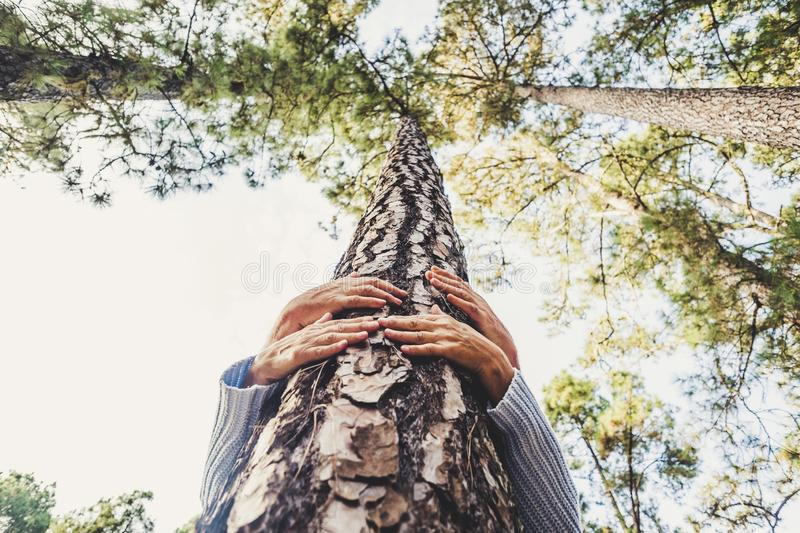 People protecting trees from deforestation concept with couple of senior caucasian hands hugging with love a pine in the wood -. Earth`s day and save the planet royalty free stock images