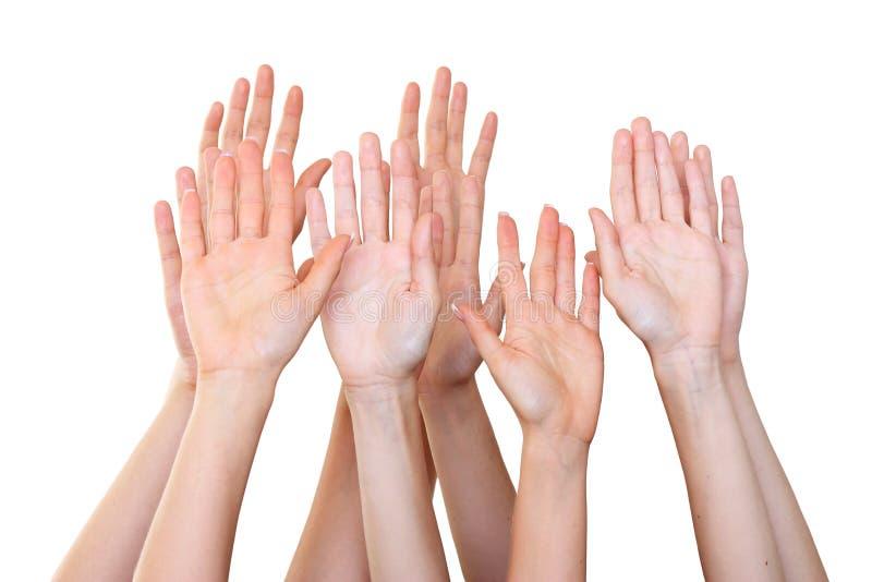 how to hand raise a weiro