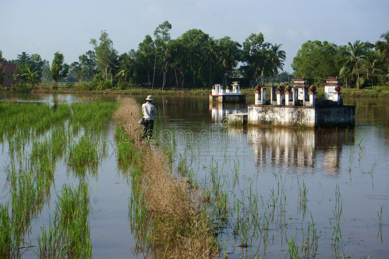 Download People Relax By Fish River Fish On Rice Field  In Flooding Seaso Editorial Stock Photo - Image: 35395498