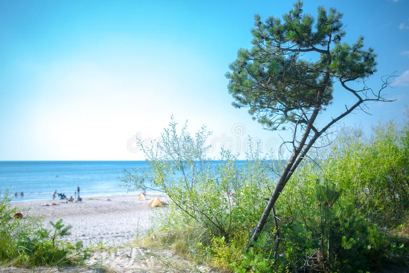 People are relaxing on sandy beach of the Baltic sea. Seaside resort at warm summer day on Baltic sea in Lithuania, Europe. Bay, beautiful, bike, calm, coast royalty free stock photos