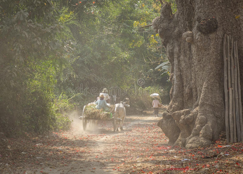 People riding ox cart on rural road in Mandalay, Myanmar royalty free stock images