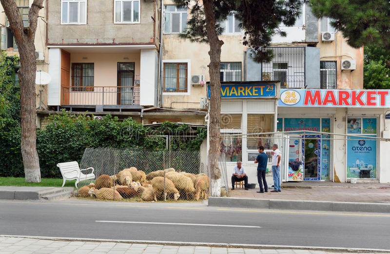 People sale sheeps during Bakrid festival Eid al-Adha. Baku royalty free stock images