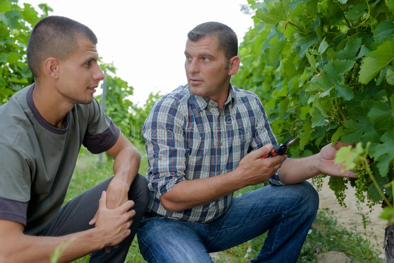 People sampling and tasting wines in vineyard stock photography
