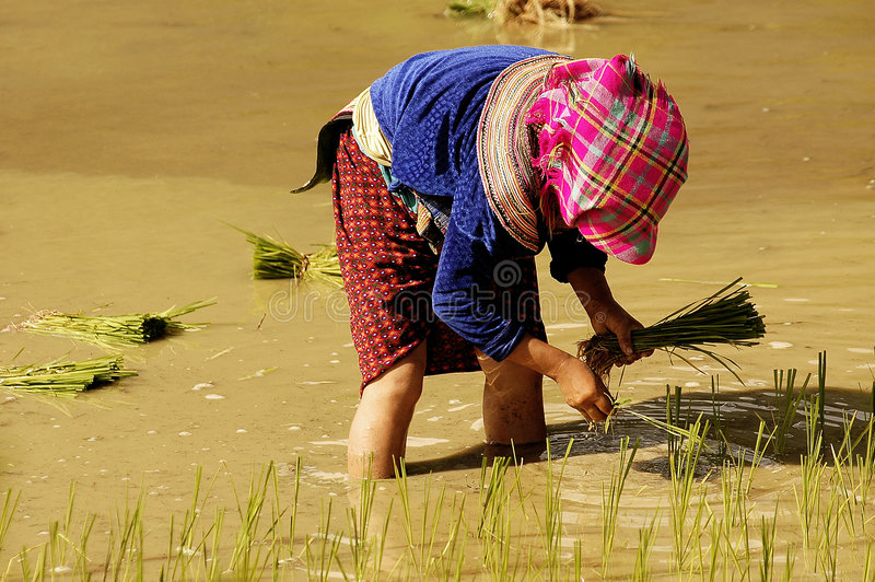 Download People of Sapa in Vietnam editorial photo. Image of terrace - 7660761