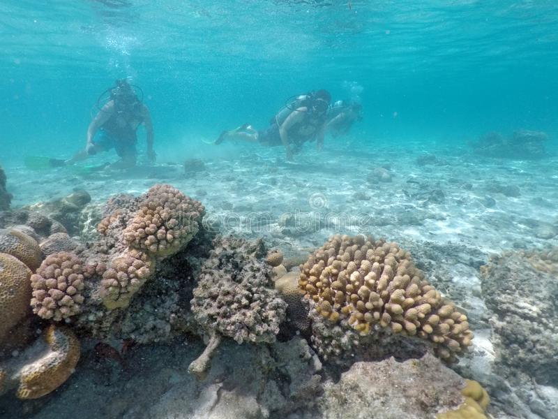 People scuba dive in Rarotonga Cook Islands. People scuba dive in Rarotonga, Cook Islands. Real people. Copy space stock photography