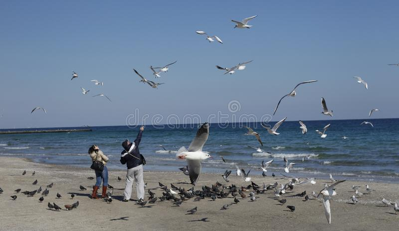 People and seagulls at the beach stock image