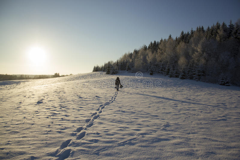 People Silhouette In Snowing Field Near Fir Forest Sun Winter royalty free stock image