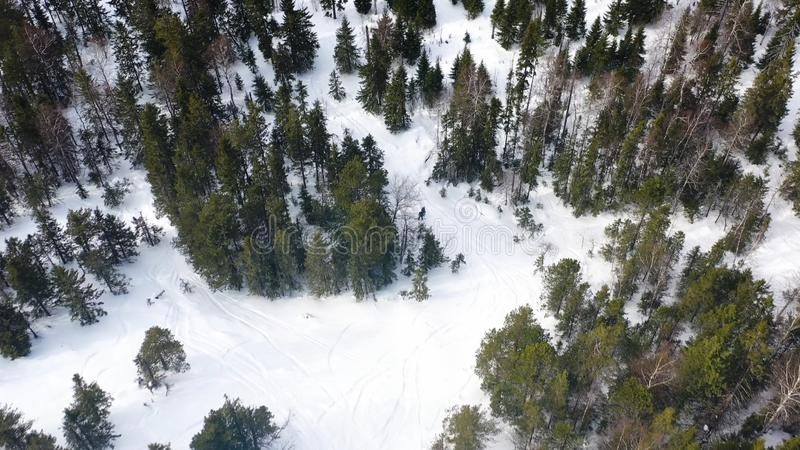 People snowboarding on snow slope in winter forest, aerial view. Footage. Drone top view of winter vacation in royalty free stock image