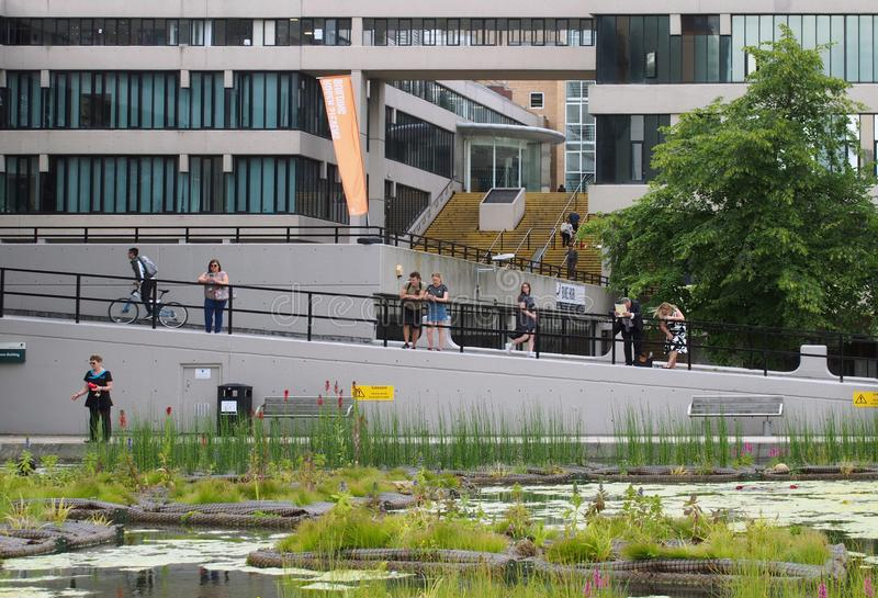 People stood around the pond watching a woman feed the ducks near the the roger stevens building at the university of leeds royalty free stock image