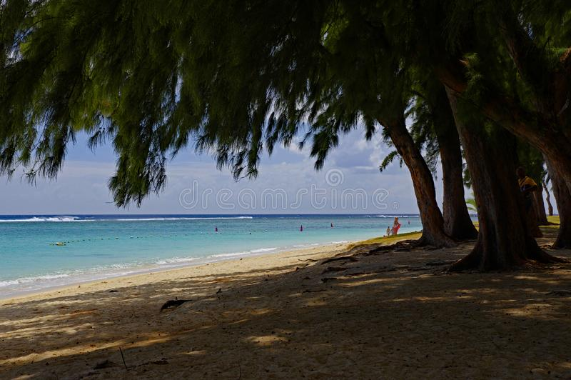 People in a sunny day walking on the public beach of Flic en Flac with tropical trees on edge of Indian Ocean, Mauritius. FLIC EN FLAC/MAURITIUS - AUGUST 20 royalty free stock images