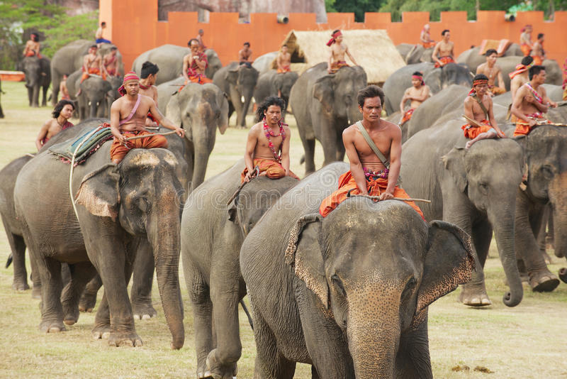 People take part in the Elephant show in Surin, Thailand. royalty free stock photo