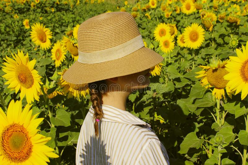 Young girl in a straw hat is standing in a large field of sunflowers. Summer time. Back view. royalty free stock image