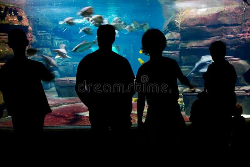 People viewing aquarium stock image