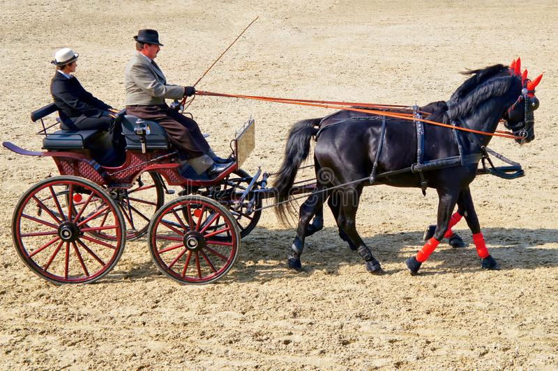 People in vintage chariot with two purebred horses royalty free stock photo