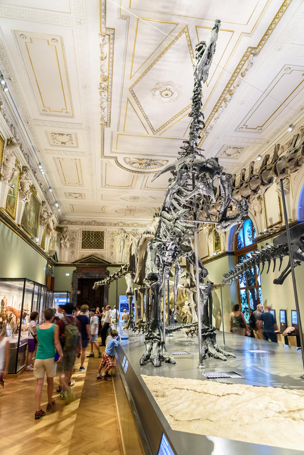 People Visit Dinosaur Prehistoric Exhibit At The Museum of Natural History (Naturhistorisches Museum) royalty free stock photos